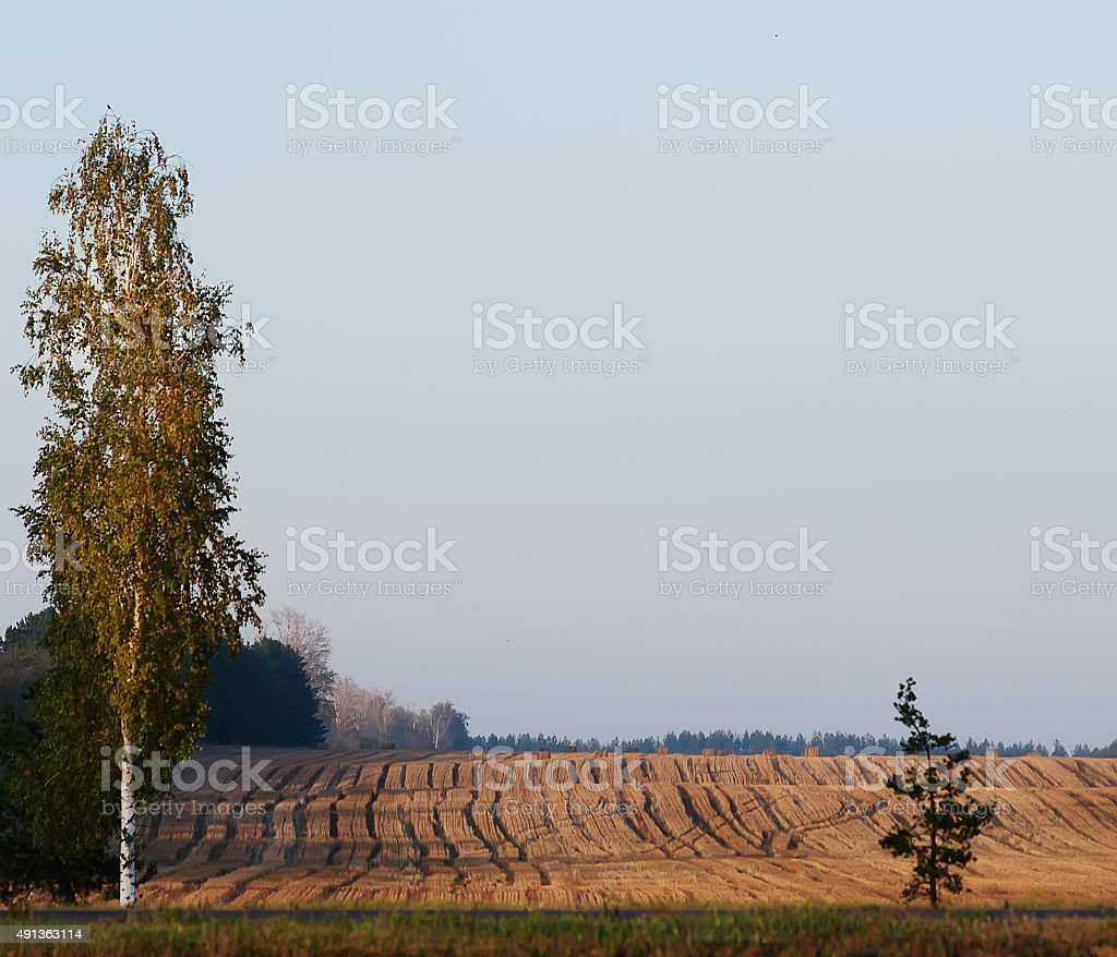 Crop harvested. stock photo