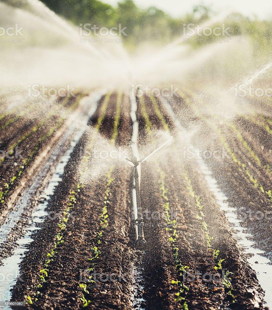 Crop Irrigation stock photo