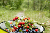 crop of bilberries and wild strawberries in the can