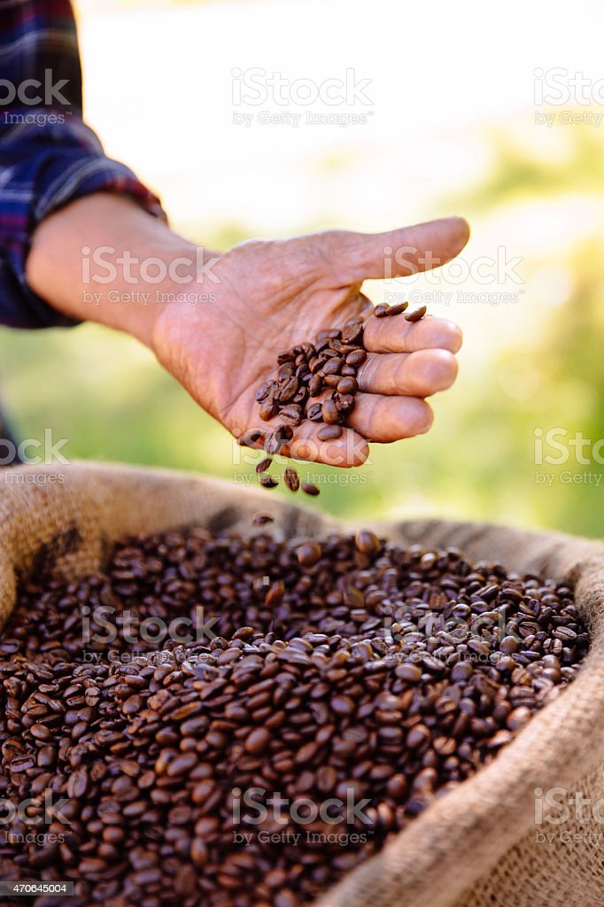 Crop of coffee beans from the farm, roasted and ready stock photo