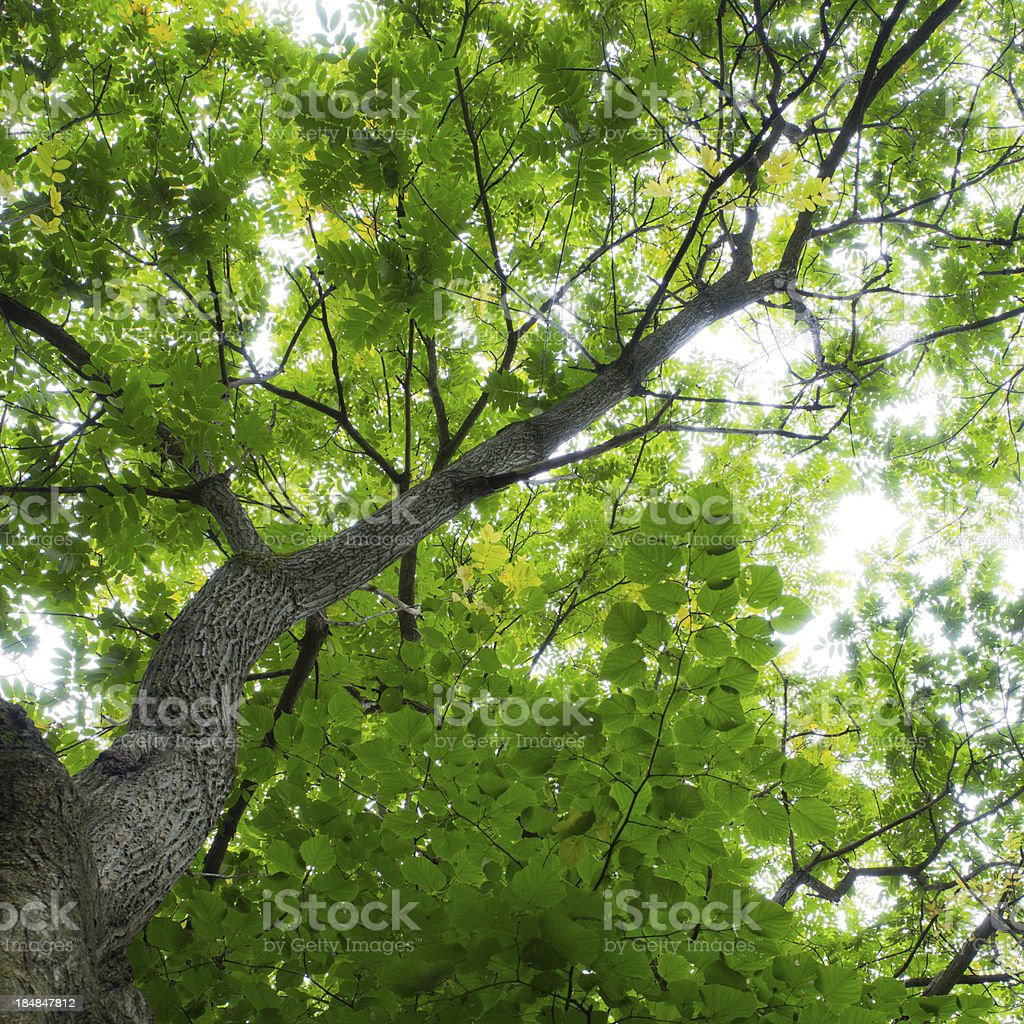 Crop of green forest royalty-free stock photo