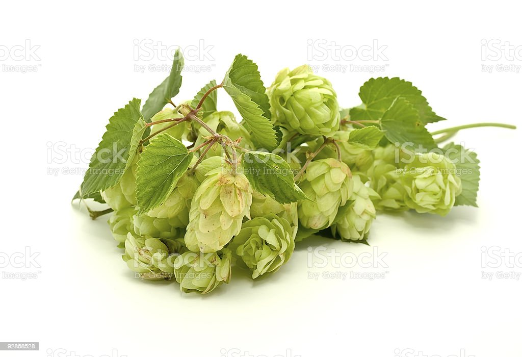 Crop of hop royalty-free stock photo