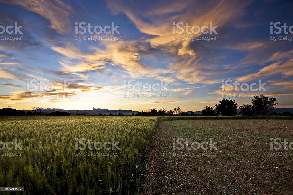 Crop stock photo