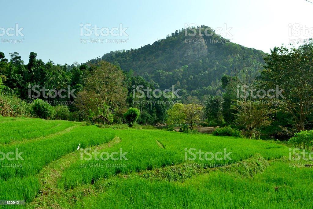 Culture agricole photo libre de droits
