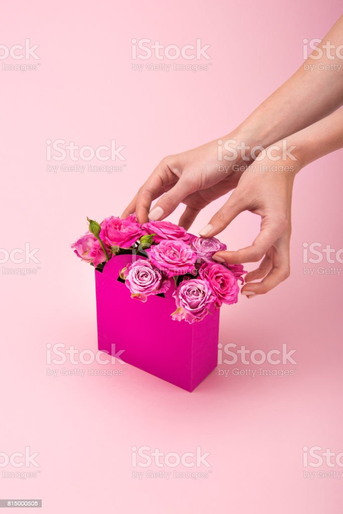 Cropped shot of hands arranging tender blooming pink roses in paper box isolated on pink stock photo