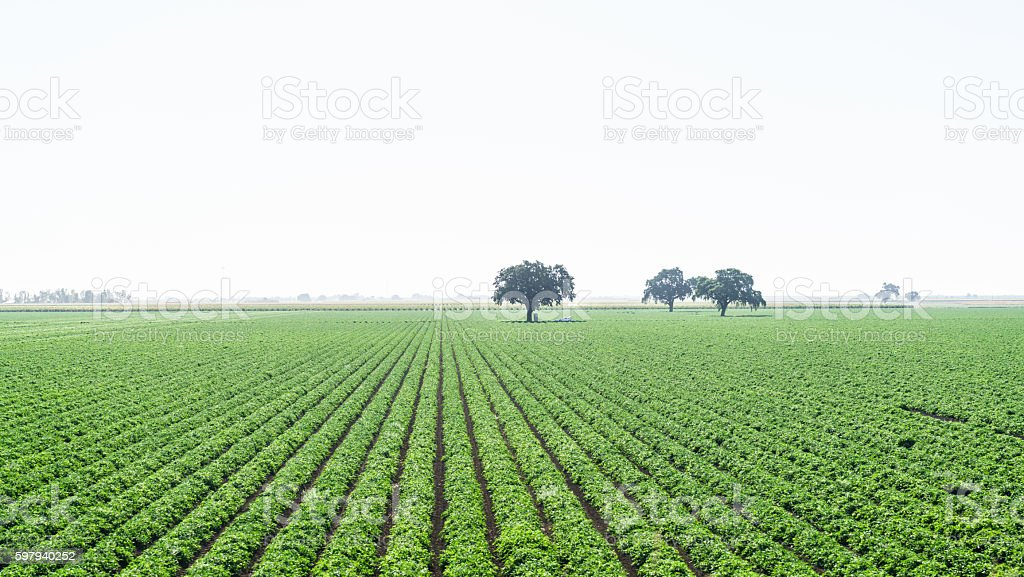 Crops Grow on Farm Land stock photo