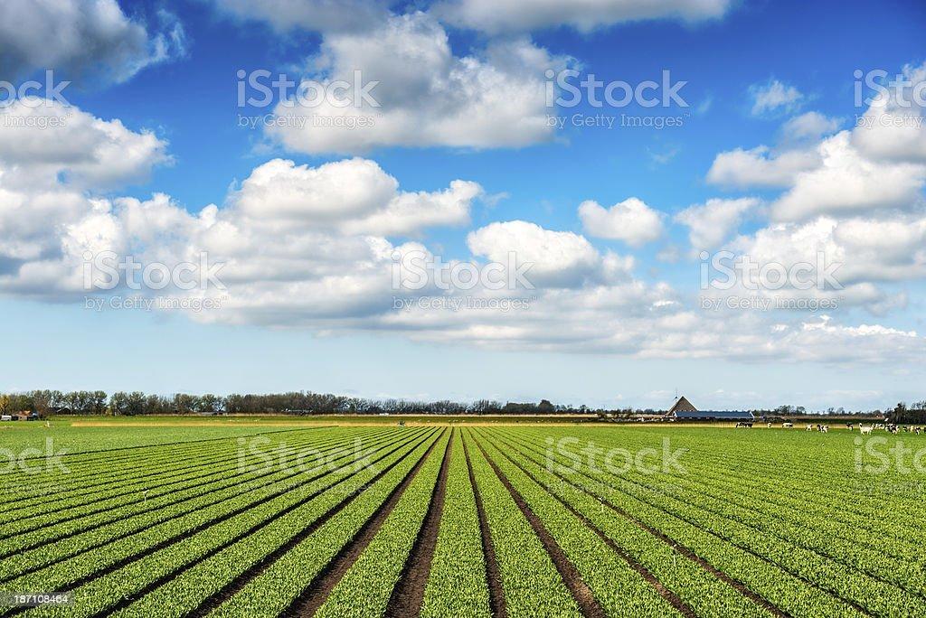 Crops Grow on Fertile Farm Field stock photo