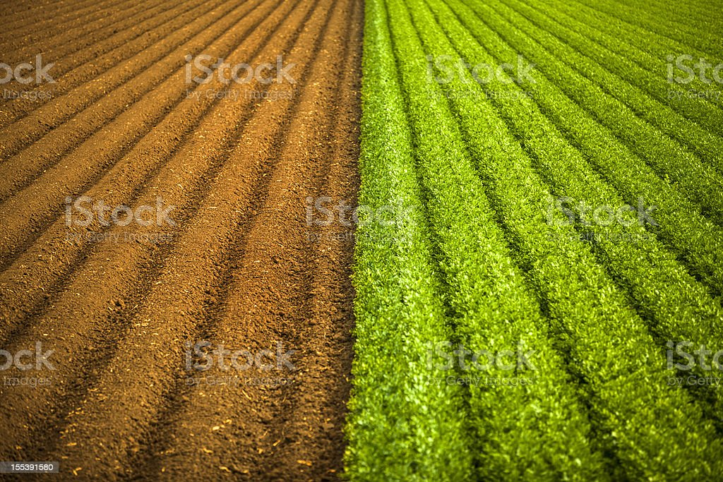 Crops grow on fertile farm land royalty-free stock photo