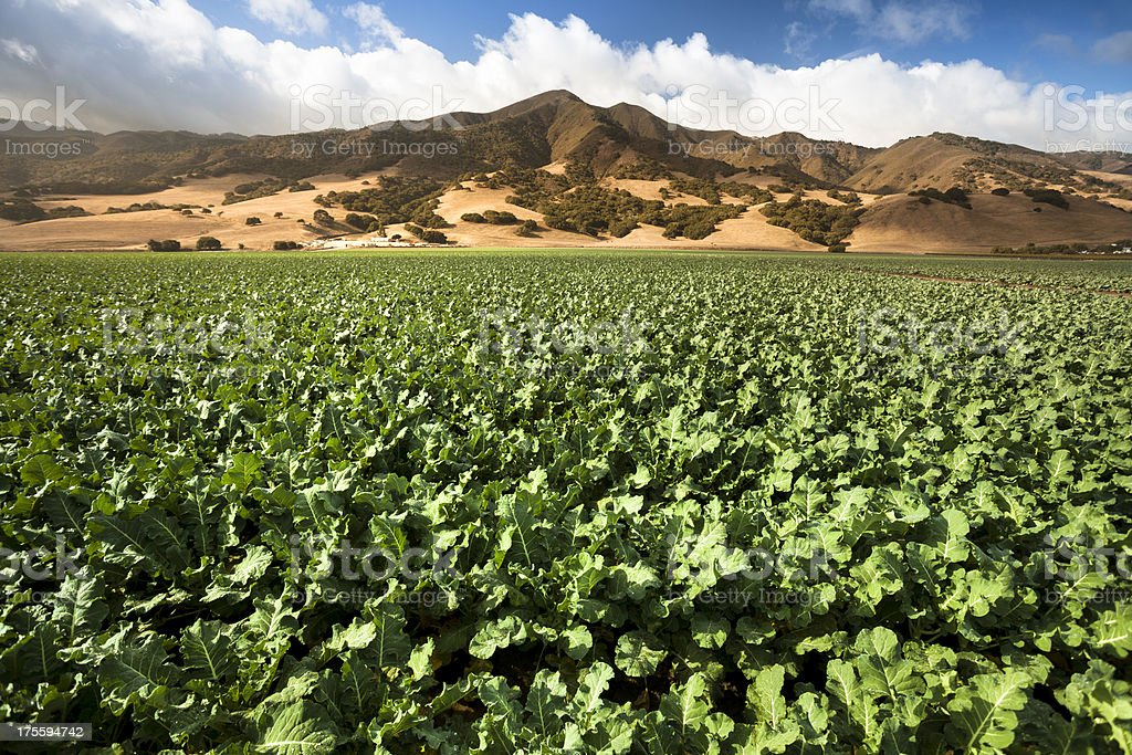 Crops grow on fertile farm land stock photo
