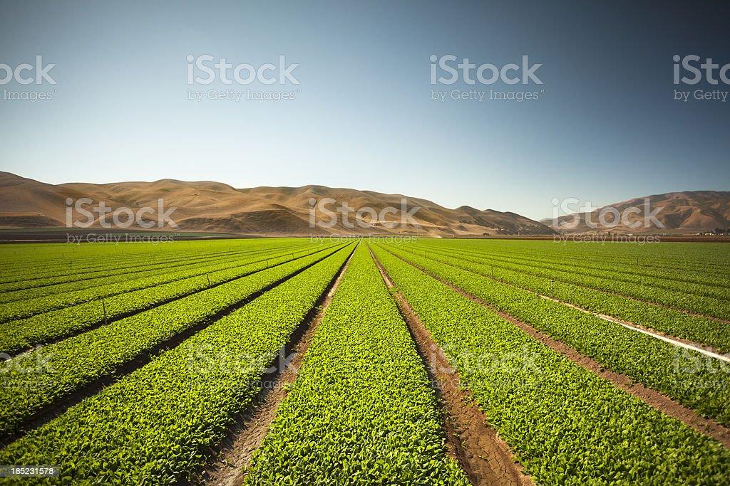 Crops grow on fertile farm land royalty-free stock photo
