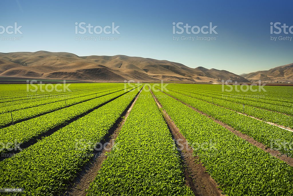 Crops grow on fertile farm land stock photo