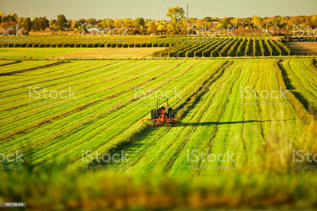 Crops growing on a farm stock photo