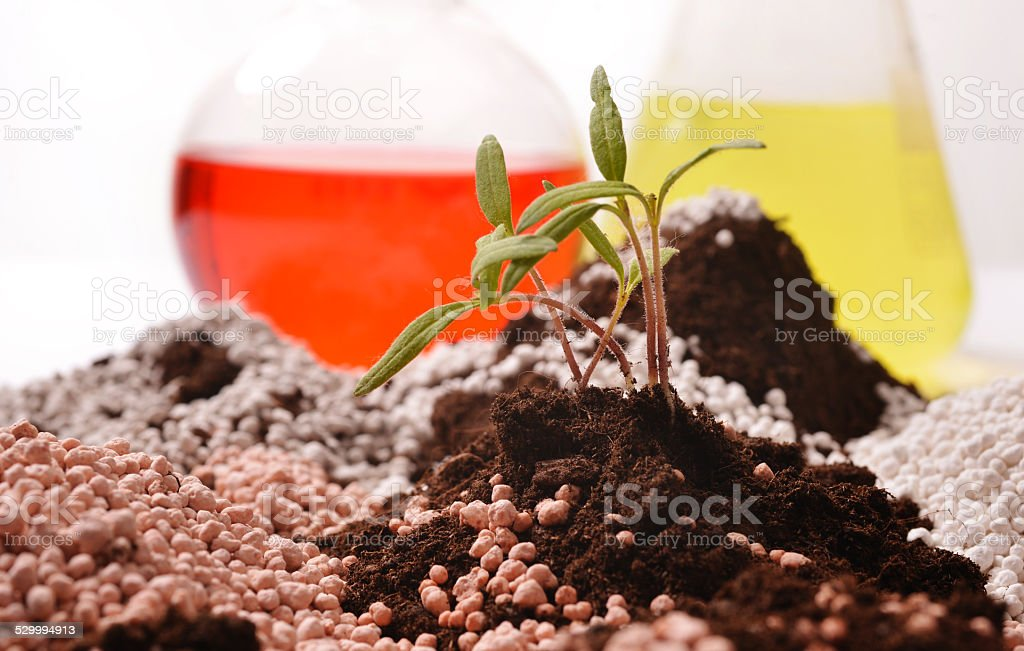 Crops growing out of pile of fertilizer stock photo