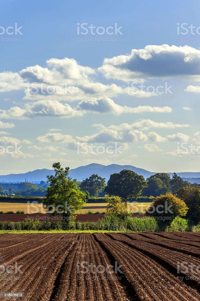 crops stock photo
