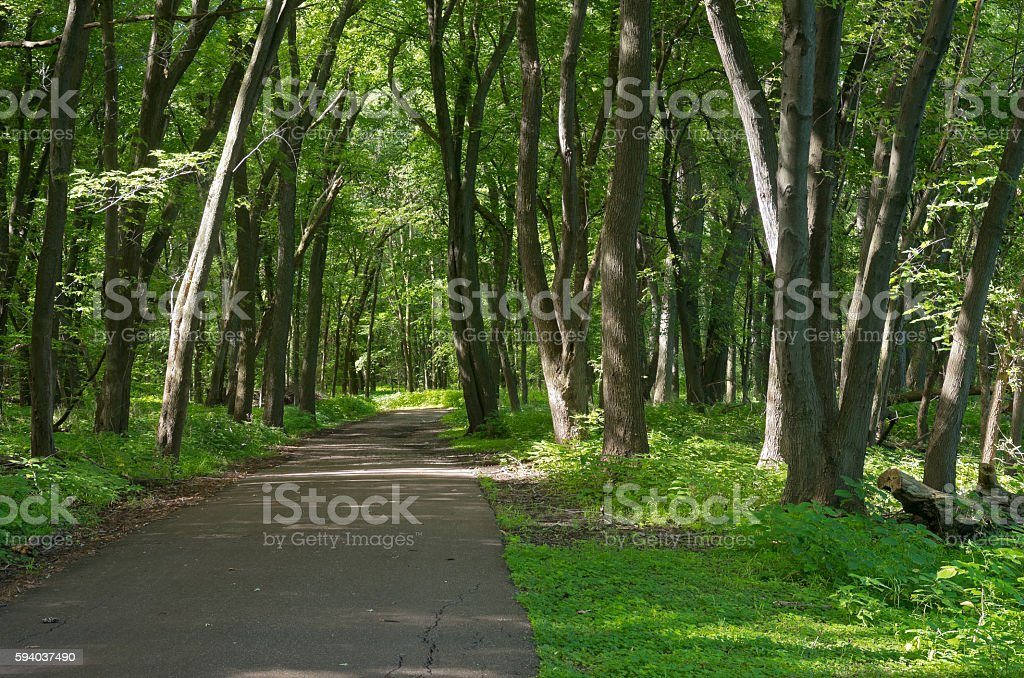 Crosby Farm Woodland Trail stock photo