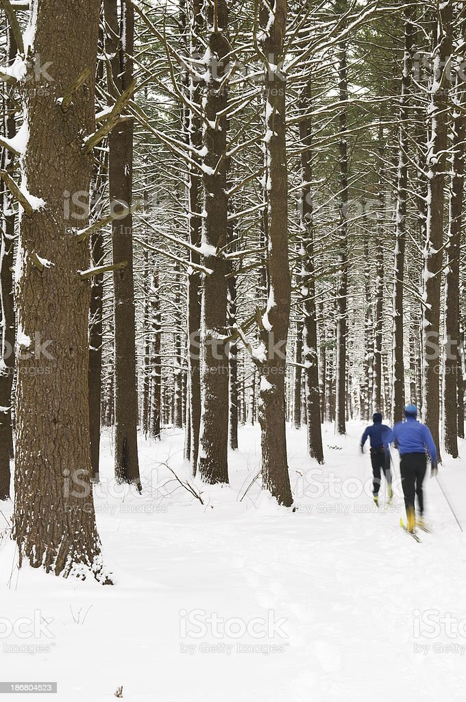 Cross Country Skiers in a Forest royalty-free stock photo