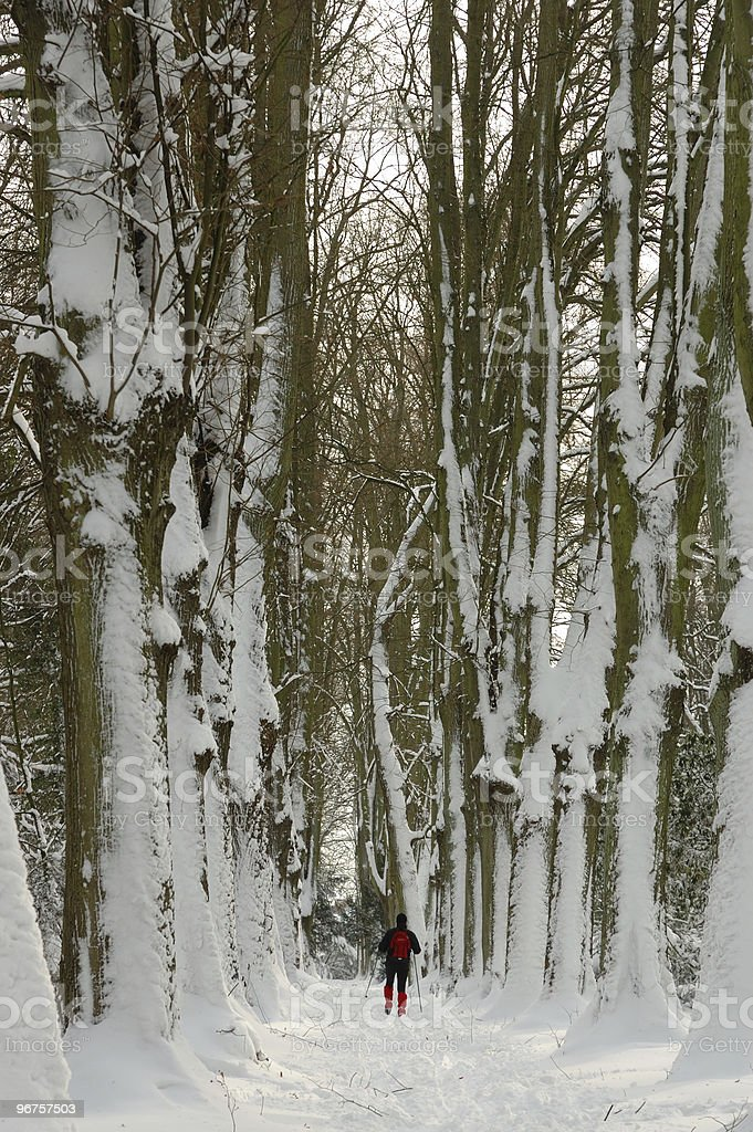 cross country skiing in the park royalty-free stock photo