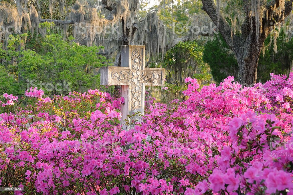 Cross in Cemetery with Azaleas. Live Oaks and Spanish Moss stock photo