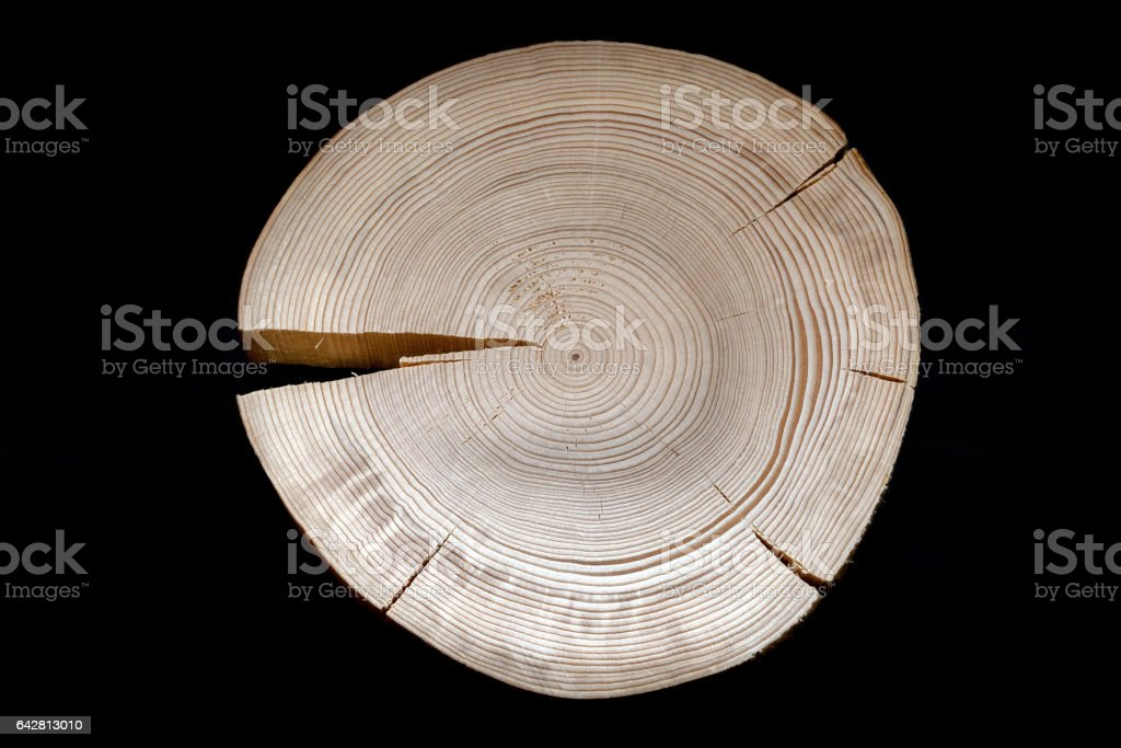 Cross saw cut pine with numerous annual rings and cracks on black background. stock photo