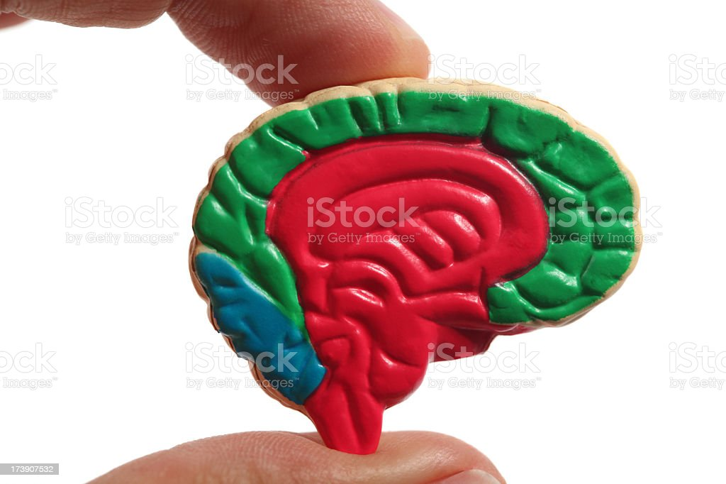 Cross Section of brain stock photo