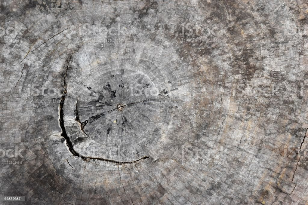 Cross section of brown tree stump with cracks and age rings. stock photo