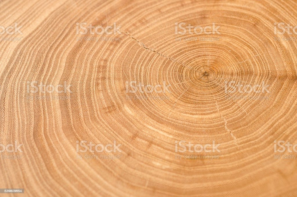 Cross section of elm tree trunk showing growth rings. stock photo