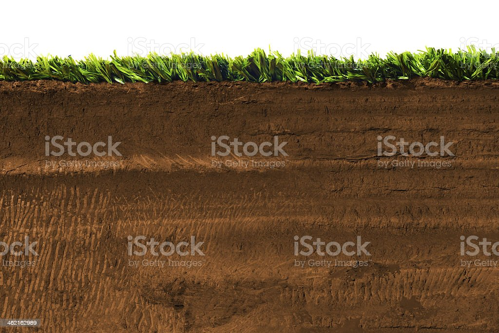 Cross section of grass isolated on white stock photo