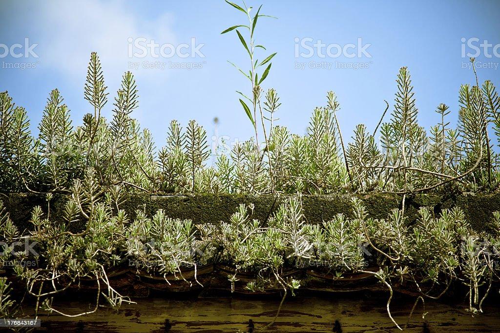 Sección transversal de crecimiento de planta foto de stock libre de derechos