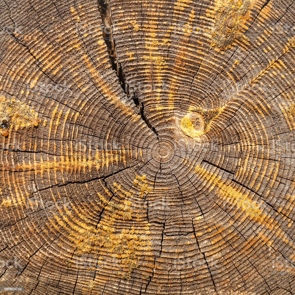 cross section of old oak beam stock photo