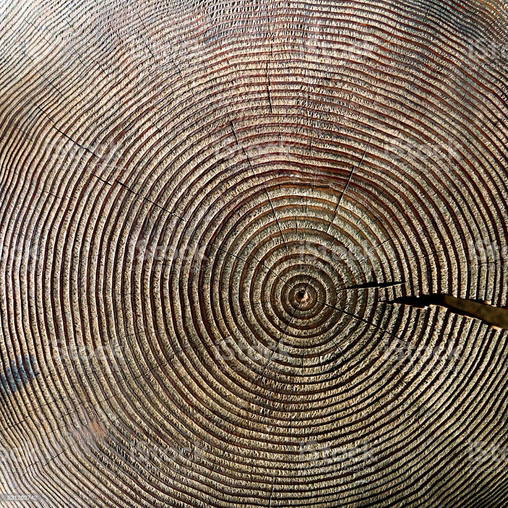 Cross section of old tree stump stock photo