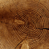 Cross section of old tree stump