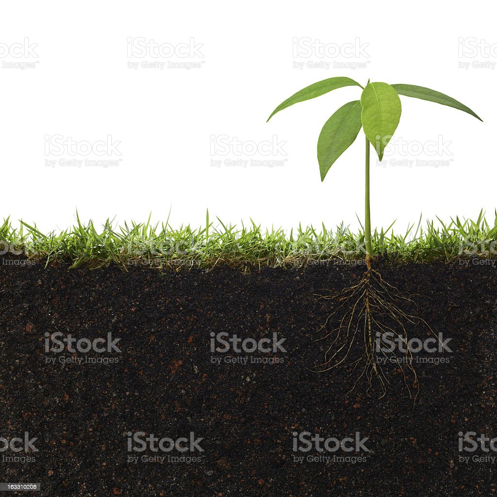 Cross section of small plant sprouting into soil stock photo
