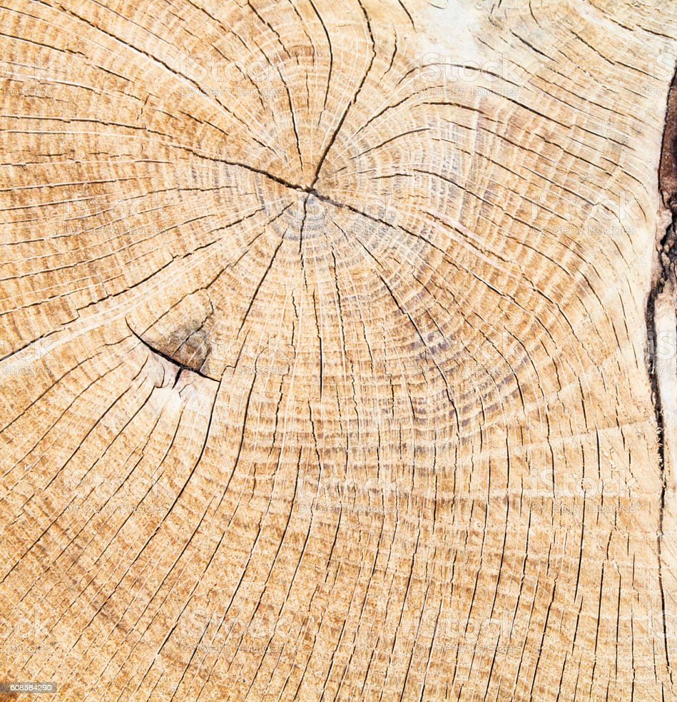 Cross section of the tree trunk stock photo