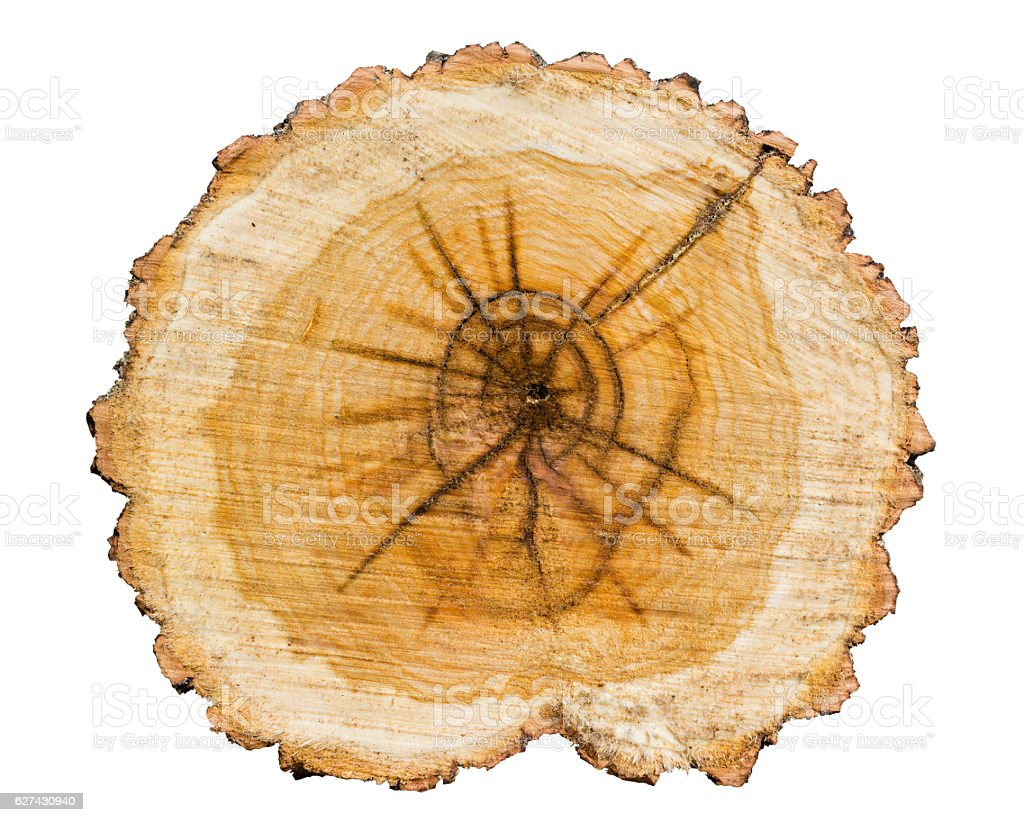 Cross section of tree trunk stock photo