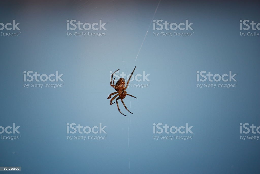 Cross spider under blue sky stock photo
