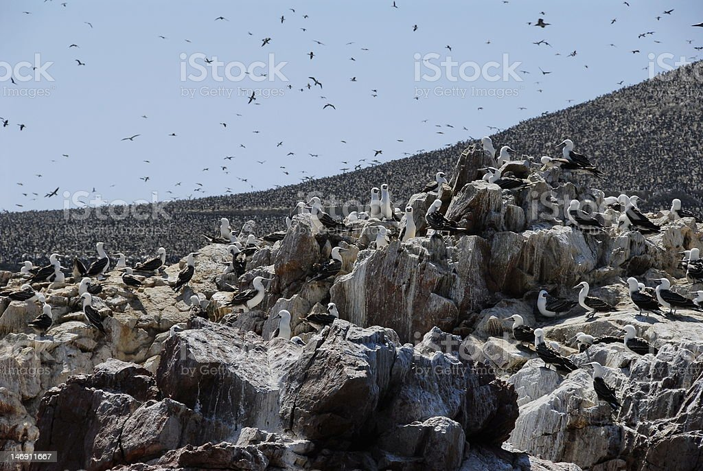 Ballestas islands royalty-free stock photo