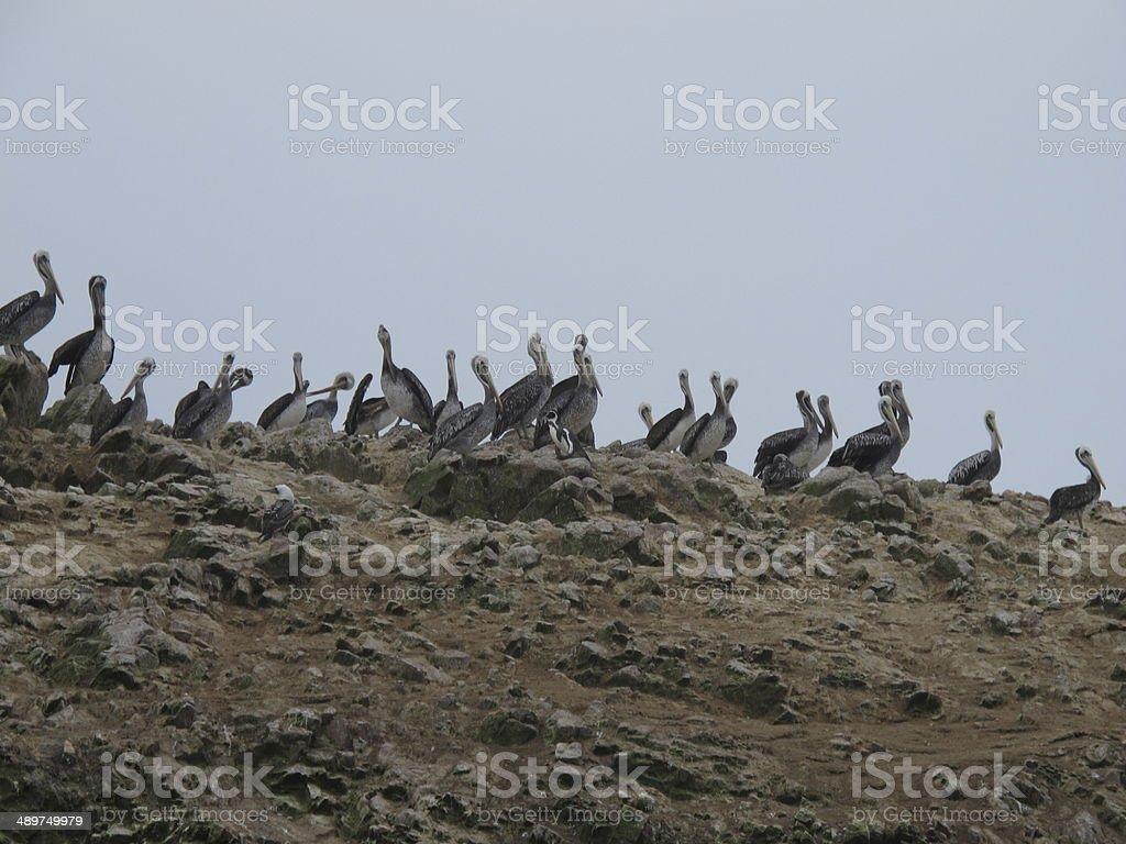 islas ballestas royalty-free stock photo