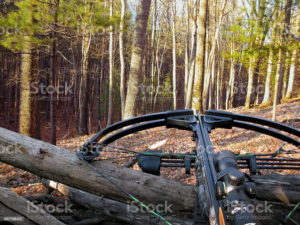 crossbow on tree trunk stock photo