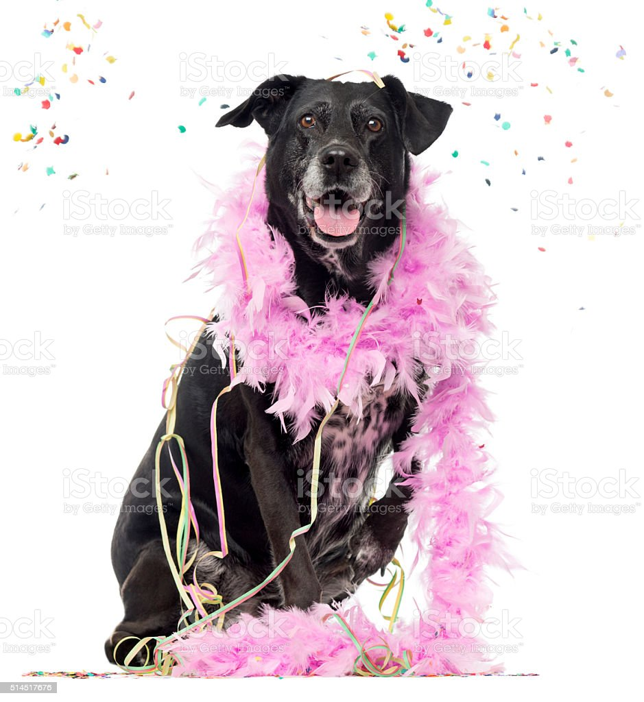 Crossbreed dog partying, isolated on white stock photo