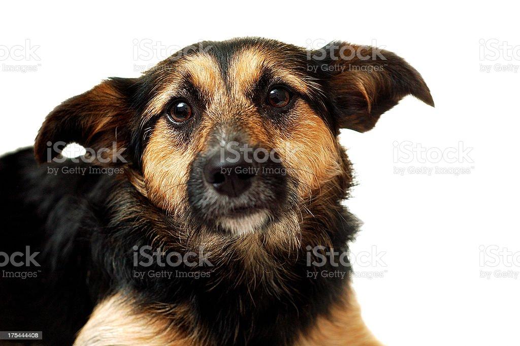 Cross-breed dog portrait stock photo