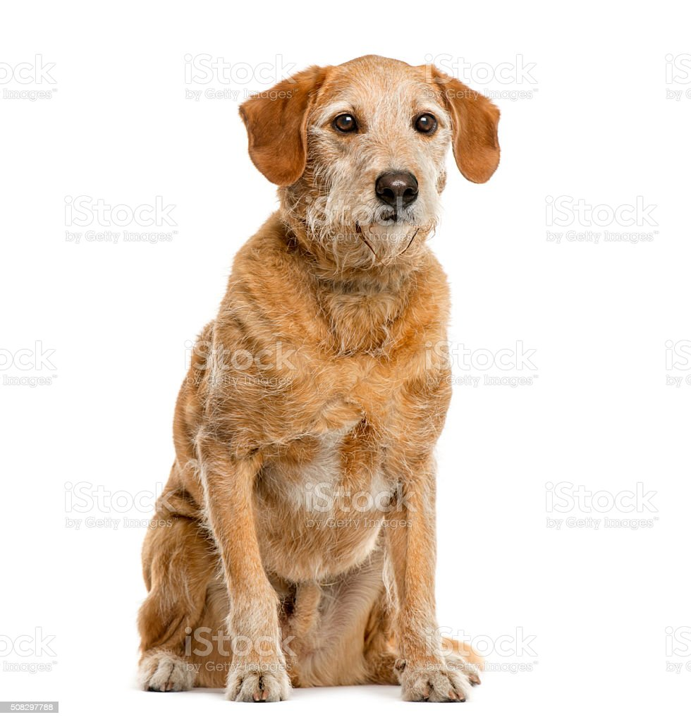 Crossbreed in front of white background stock photo