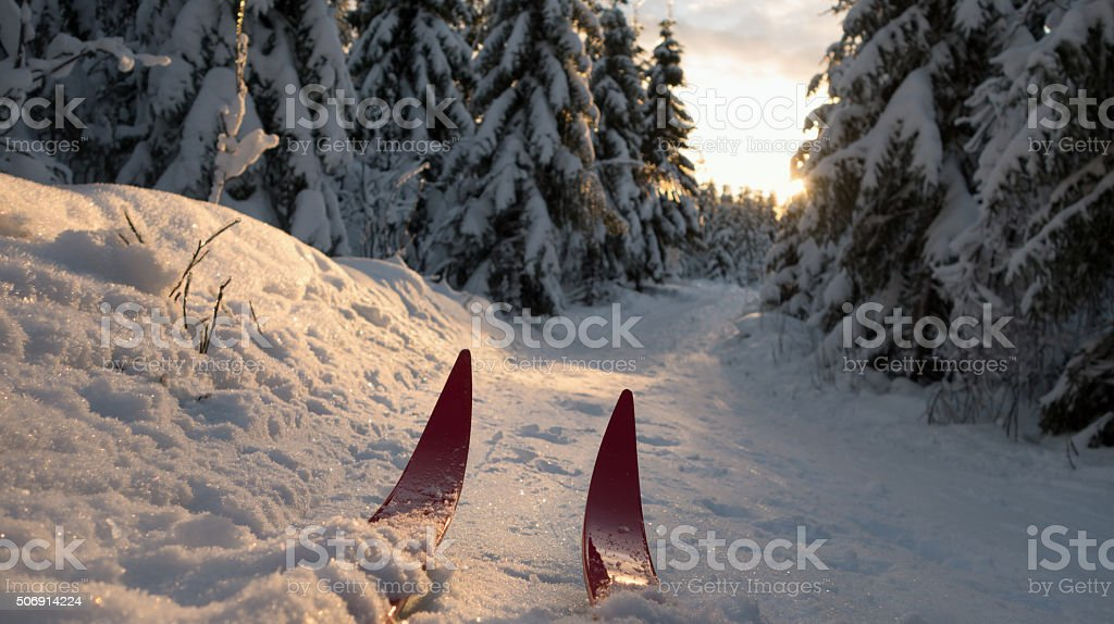 Cross-country skiing at sunset in Oslo, Norway stock photo