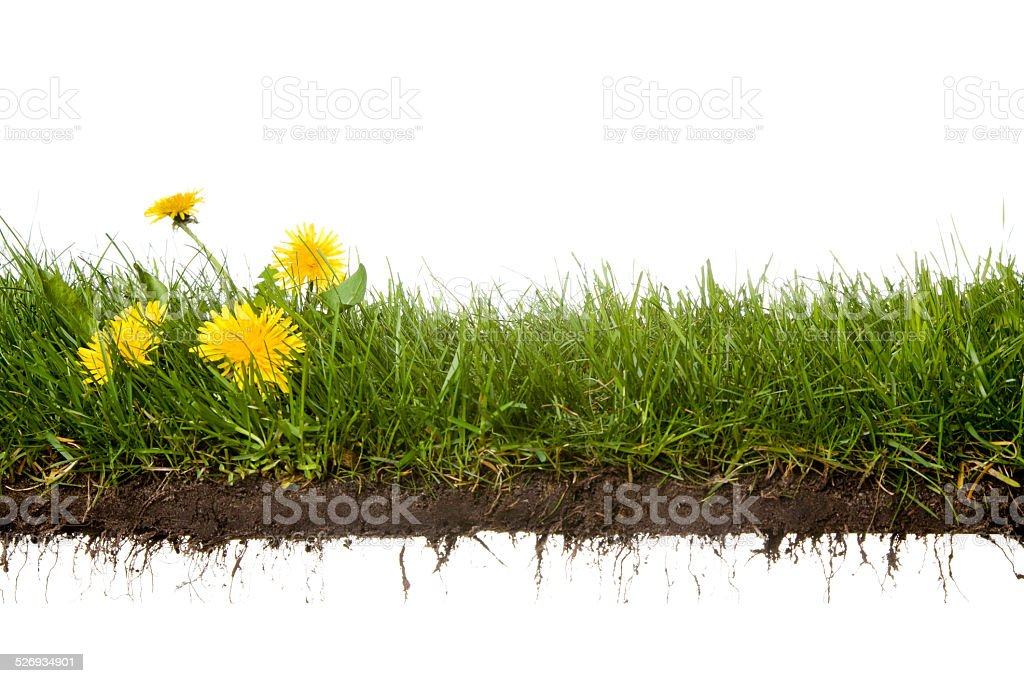 cross-cut of grass with flowers stock photo