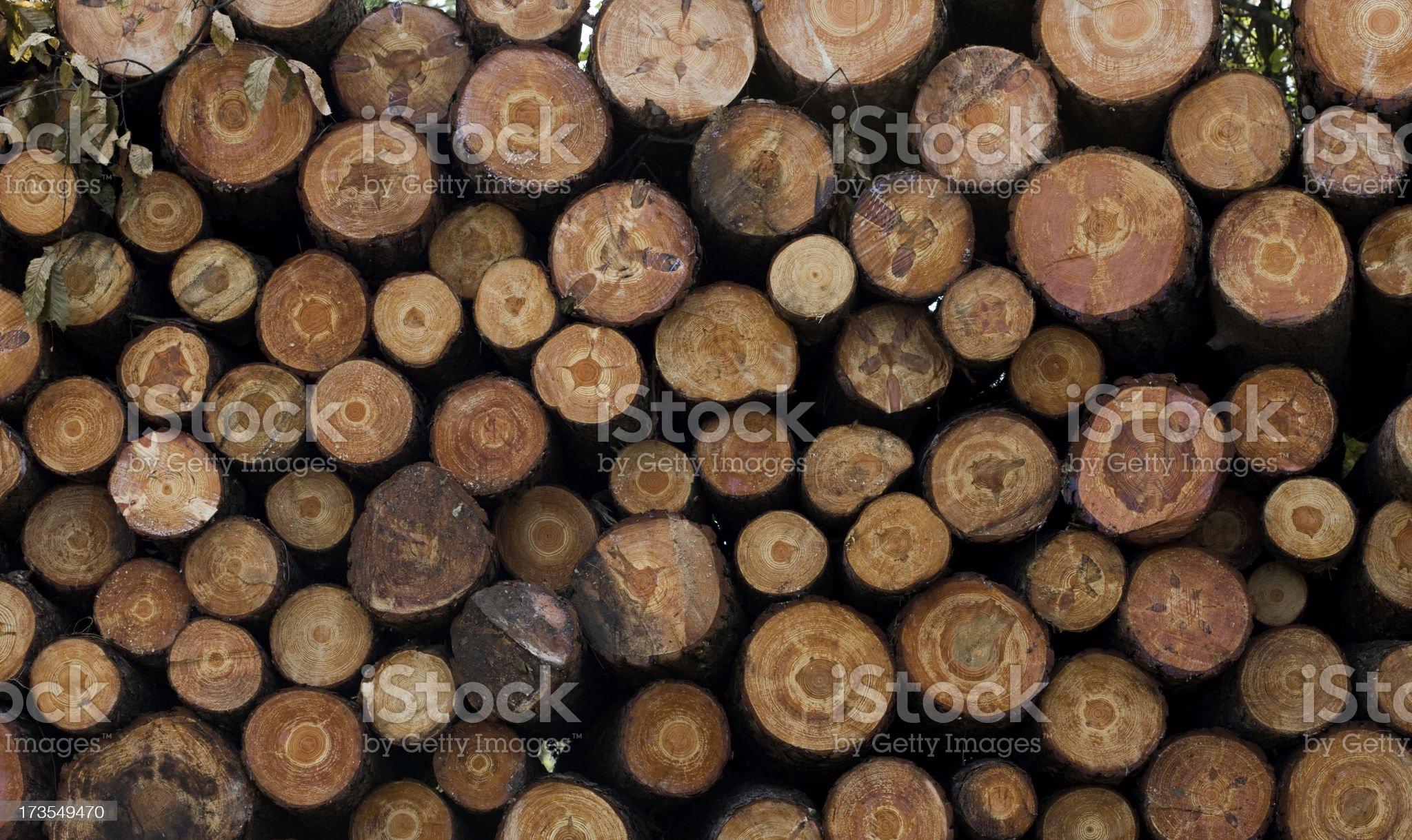 Crosscut Wood royalty-free stock photo
