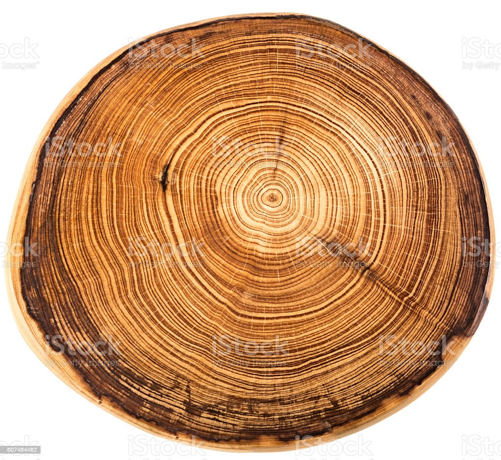 crossection of an  tree trunk stock photo