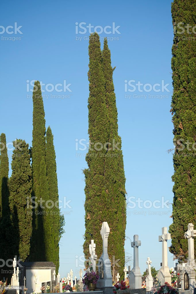 Crosses and tall cypresses in a spanish cemetery. stock photo
