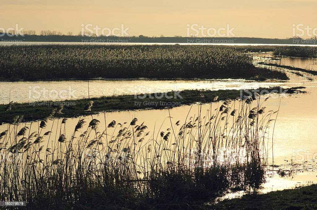 cross-processed Havel River in Dusk with silhouette by reed stock photo