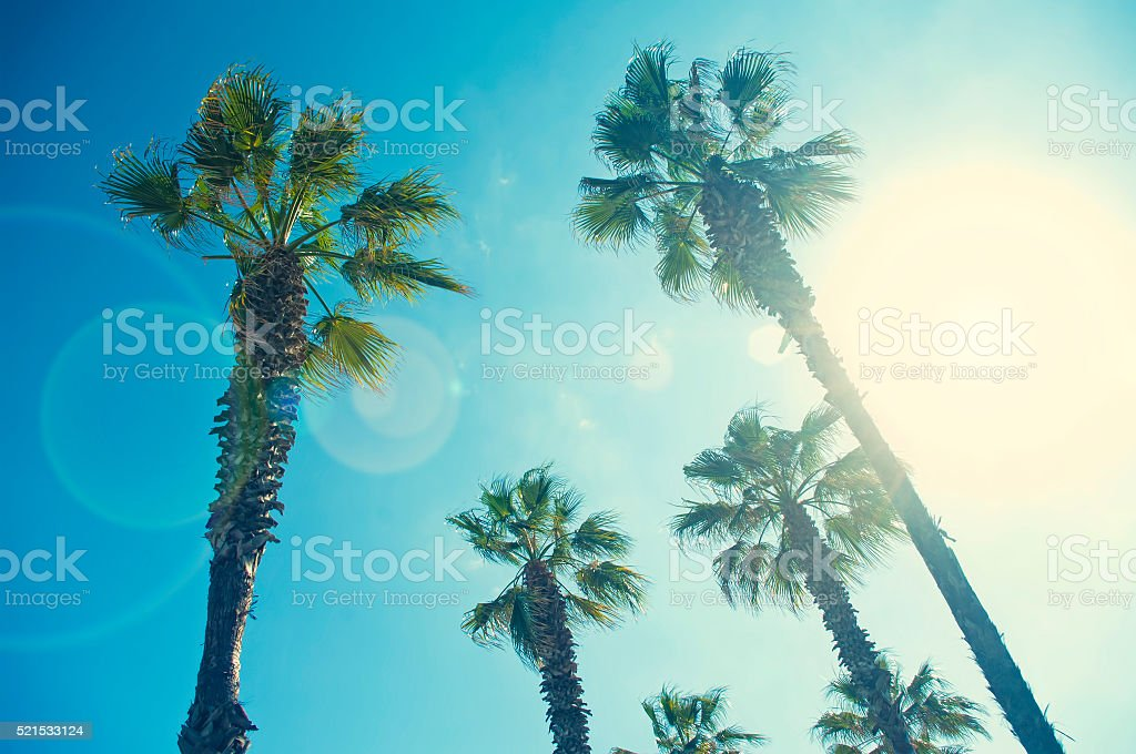 cross-processed image of palm trees from below on sunny day stock photo