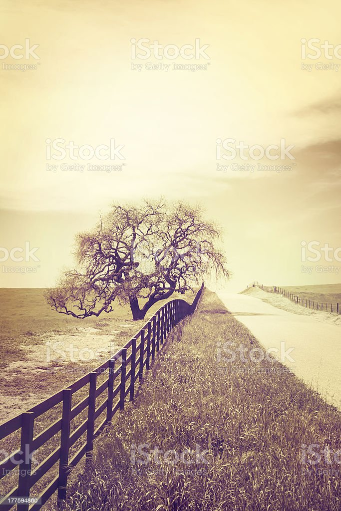Cross-Processed Oak and Country Road royalty-free stock photo