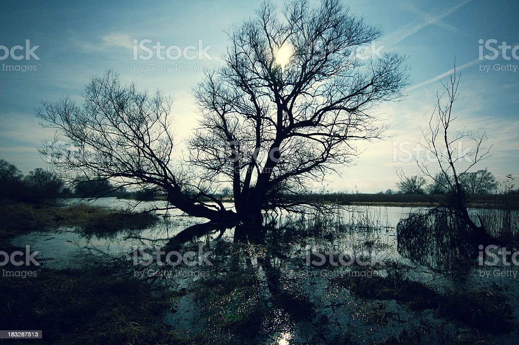 cross-processed of havel River with silhouette typical willow tree stock photo